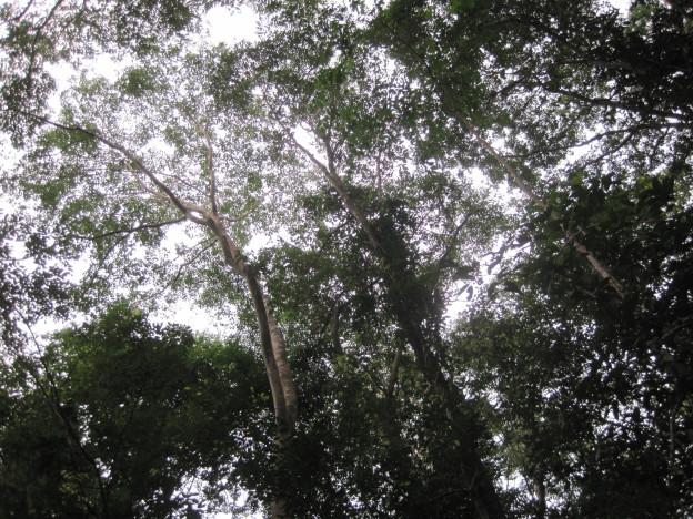 Canopy in Sakaerat