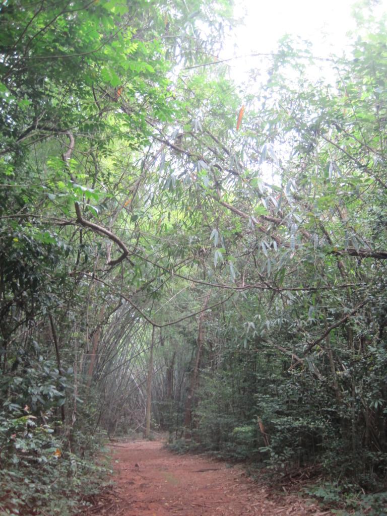 Trail in Sakaerat