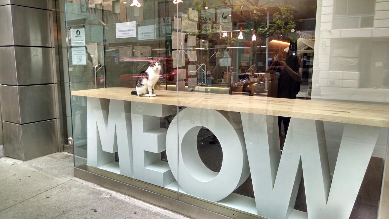 Meow Parlour shopfront
