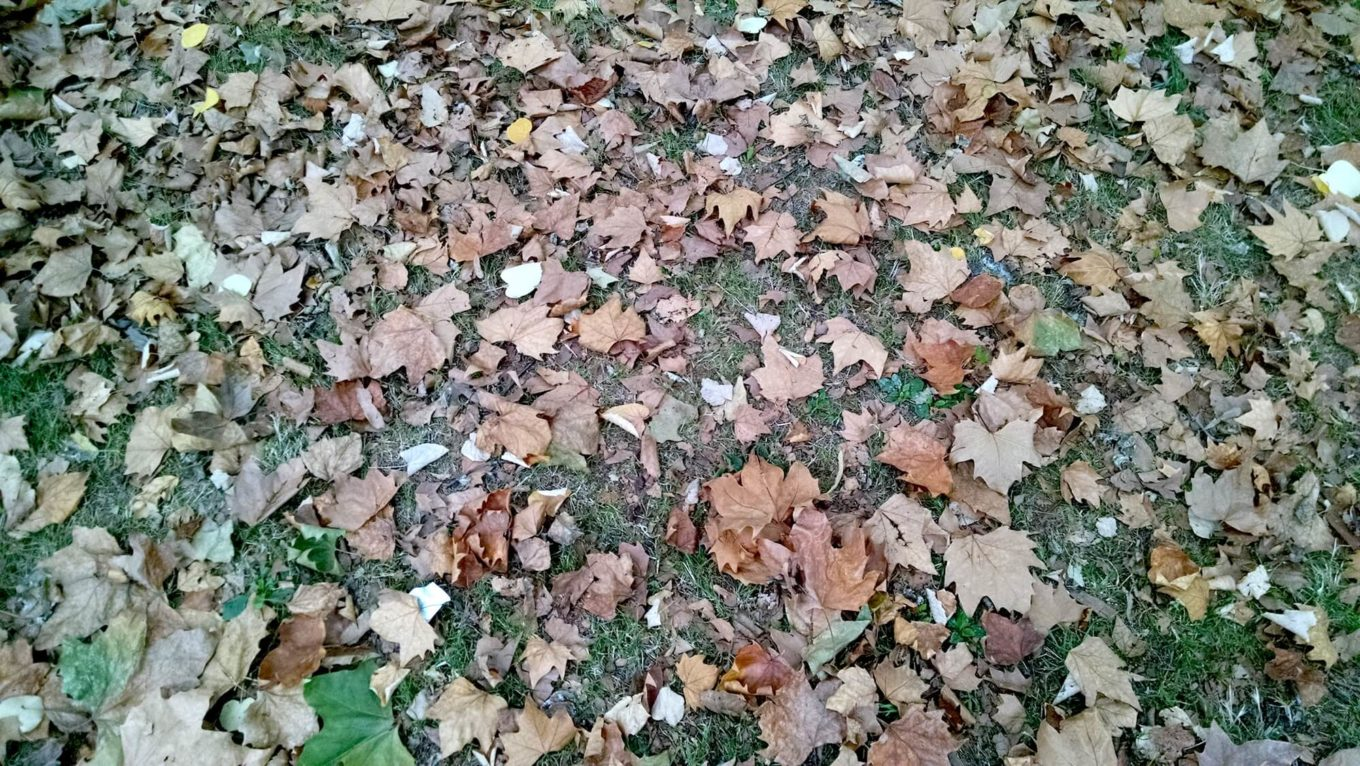Scattered leaves on grass